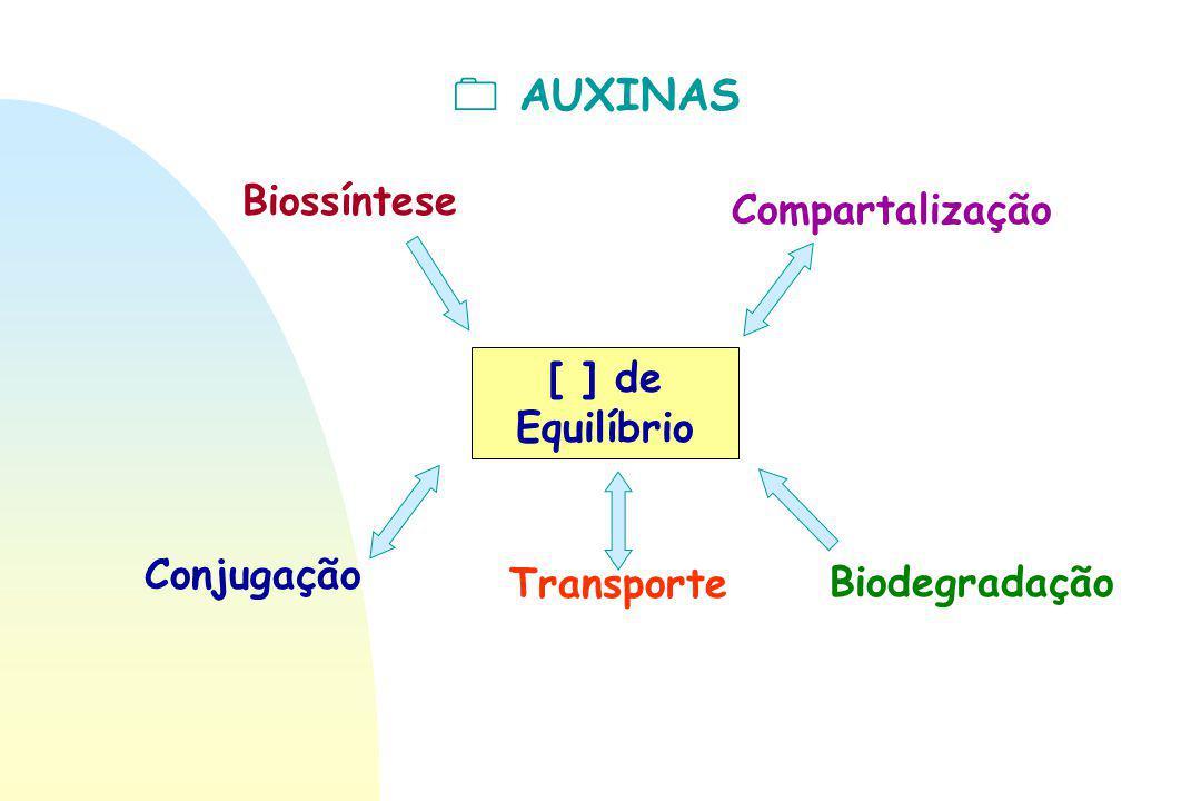  AUXINAS Biossíntese Compartalização [ ] de Equilíbrio Conjugação